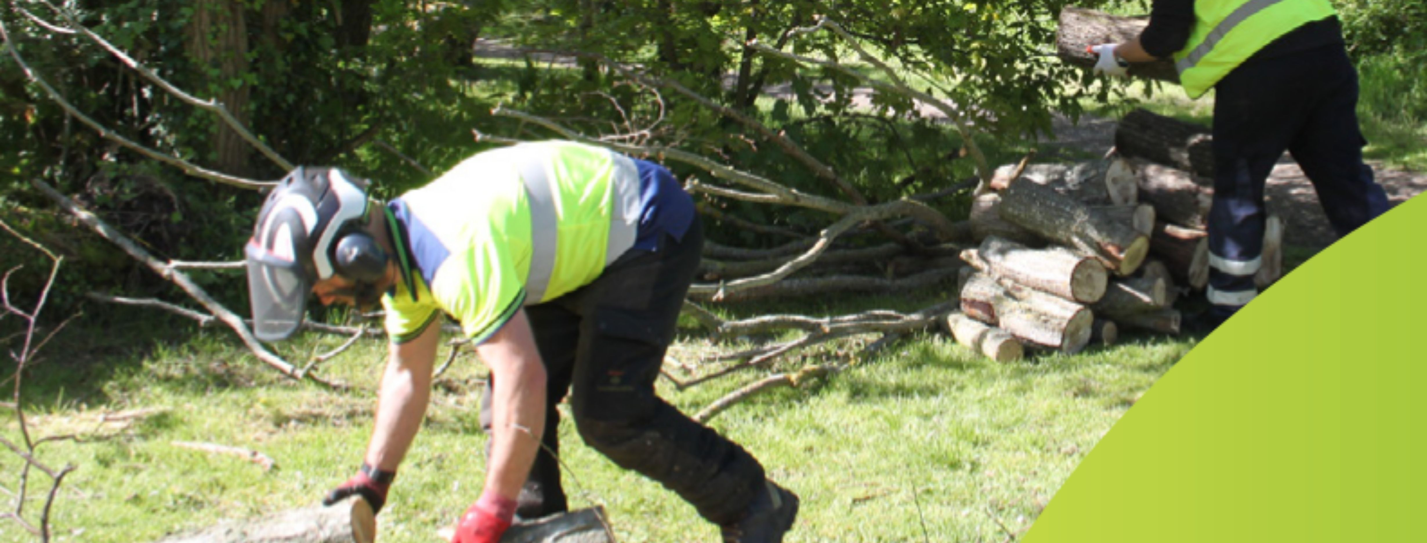 News article entitled Victoria Park tree maintenance work to begin
