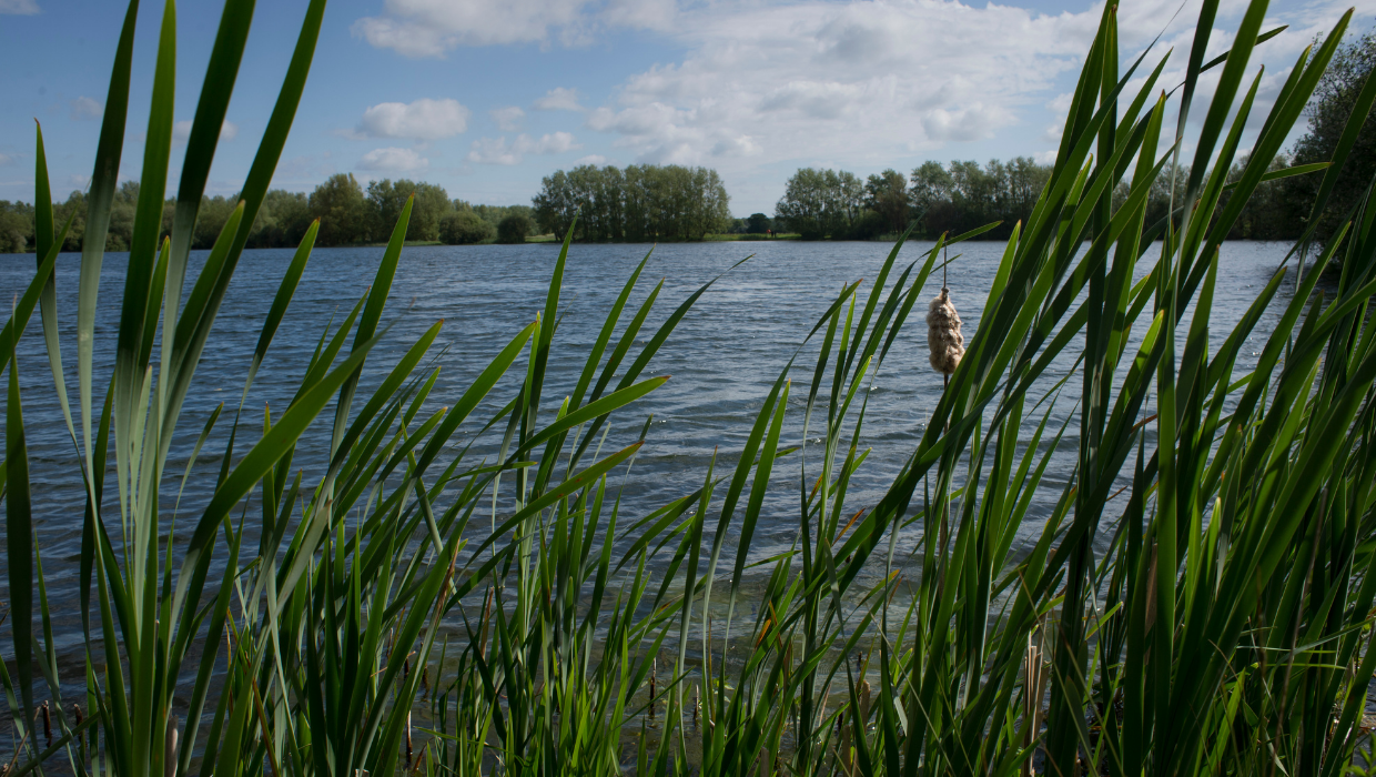 News article entitled Consultation launched for Conningbrook Lakes Public Space Protection Order